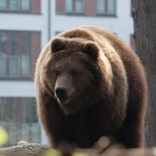 クマが引き戸を開け民家のダイニングをうろうろ 家人は2階にいて無事