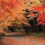 【全国紅葉の絶景】こころが清められる、三重県の紅葉人気スポット