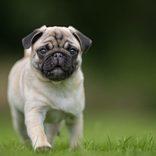 「お散歩」に反応する愛犬に他の単語を話していると… 夫の反応に爆笑