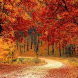 タイトルに「秋」とつく人気曲ランキング