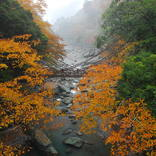 【全国紅葉の絶景】平家隠れ里の秘境、徳島県の紅葉人気スポット