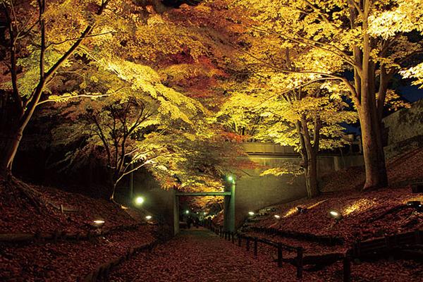 上田城跡公園けやき並木遊歩道