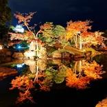 彦根城の庭園「玄宮園」が夜間特別公開!期間限定紅葉ライトアップが美しすぎる