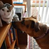 犬や猫の健康管理に「ペット手帳」。LINE版ならより手軽に