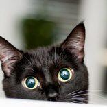 ロシアの刑務所で猫に薬物を運ばせる事件 「盲点を…」と懲役太郎も驚愕