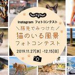 じゃらんインスタグラム「旅先でみつけた 猫のいる風景」フォトコンテスト開催!