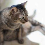 ノブコブ吉村が語った「くまだまさし秘話」が破天荒すぎる 「猫を36匹飼って…」