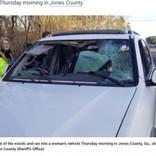 鹿との衝突事故が急増 撥ねた鹿がフロントガラスを突き破り車内に飛び込むケースも(米)