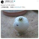 上野動物園「今朝のライチョウです」 ツイート投稿に「まん丸まるまる」「でっかいカブみたい」の声