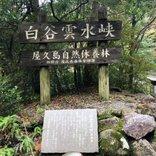 ドラゴンクエストウォークのおみやげゲット! 鹿児島の最難関スポット? 自然に圧倒される屋久島の「白谷雲水峡」