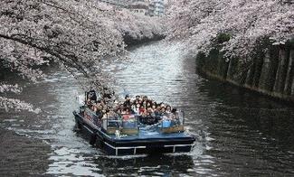 目黒川の桜祭り