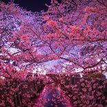 【2020目黒川の桜祭り】見どころや日程、ライトアップ情報、桜を見ながら楽しむグルメも!
