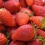 【1月15日は何の日…!?】甘酸っぱさが魅力、いちごの日!
