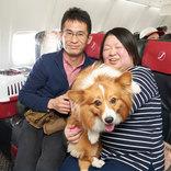 ジャルパック、愛犬と機内で過ごせる「JALワンワンJET 沖縄4日間」を抽選販売