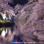 【2020】千鳥ヶ淵周辺でお花見!千代田さくらまつり日程やライトアップ期間など