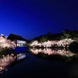 『平安神宮 紅しだれコンサート』が今年も開催、東儀秀樹、NAOTO、川井郁子、TSUKEMENが出演
