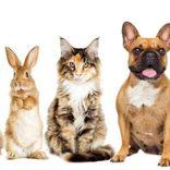 人気のペットはチンチラ! 犬、猫、ねずみランキング