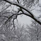 【1月25日は何の日…!?】ブルブル震えちゃう!「日本最低気温を記録」した日!!