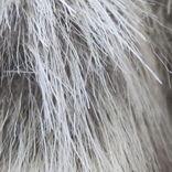 ストレスで白髪が増える理由が解明! カギを握るのは、幹細胞だった