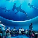 <3月オープン>四国最大級「四国水族館」の魅力に迫る!料金や館長のおすすめを紹介