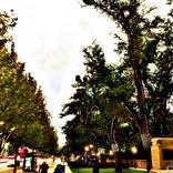 【世界の街角】オーストラリア、南オーストラリア州の州都「アデレード(Adelaide)」とは?
