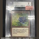 650万円のMTG高額カードを購入も…版違いの安い方だった ショップが謝罪し交換「スタッフの誤りで違う商品を」