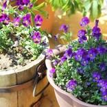 """一足早く""""春気分""""が楽しめる…鉢植えの花々とかわいいガーデニンググッズたち"""