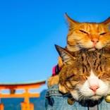 """2月は""""猫""""に会いに行こう!都内で開催される「猫イベント」4選"""