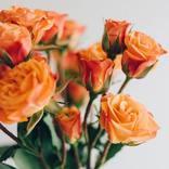 ORANGE RANGEが大切な人に届けたかった「花」の意味