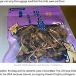 中国からの乾燥鳥、米空港で没収 パッケージには日本語で「ペットはそれを愛します」