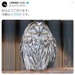 上野動物園のフクロウが「おはようございます」 ツイート投稿に「寝る時間かなぁ」「眠そう?」ツッコミの声も