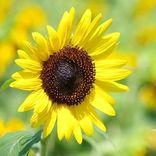 ガーデニングにおすすめの夏の花特集!おすすめの種類&コーディネート実例をご紹介