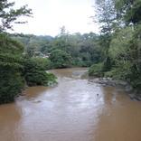 オラウータンなど野生動物の宝庫! ボルネオ島の「熱帯雨林ツアー」を現地ルポ【マレーシア】