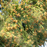 花粉症が辛くて仕事ができない!約7割が「パフォーマンスに影響」