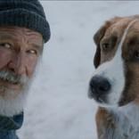 ハリソン・フォード『野性の呼び声』、名犬を演じたのは人間! 元シルクドソレイユの体操選手
