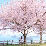 【お花見特集2020】瀬戸内を望む山に広がる幻想的な桜景色「紫雲出山」