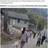 新型コロナウイルスの拡散防止を理由に、中国で村中の犬が撲殺