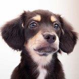 犬の鼻が湿っているのは元気な証拠なのか?家庭犬訓練士に聞いてみた