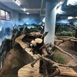 パンダ愛好家たちが認めた「世界一のパンダ動物園」を現地ルポ【オランダ】
