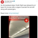 そもそも空飛べるよね? インドの格安航空機内になぜか鳩