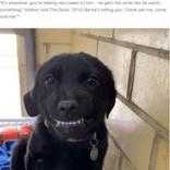 「僕をもらって」 歯を見せて笑うアニマルシェルターの犬(米)<動画あり>