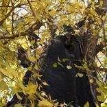 1本の木に会いに行く(14)飛木稲荷神社の戦災イチョウ<東京>