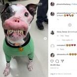「醜い」と捨てられた? 自己免疫疾患を患う犬、保護されて幸せを掴む(米)<動画あり>