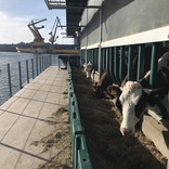 自然エネルギーで稼働!海に浮かぶ酪農場「Floating Farm」を現地ルポ【オランダ】