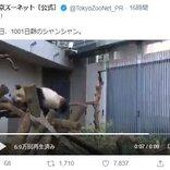 パンダのシャンシャンが木の上を歩いた結果→「ズッコケも迫力満点」「危なかった~」