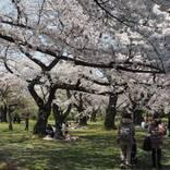 1本の木に会いに行く(15)小石川植物園の染井吉野<東京>