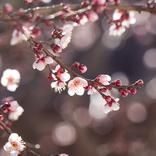 【二十四節気】「春分」の読み方や意味は?ぼたもちとおはぎの違いは?