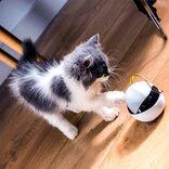 愛猫と一緒にお留守番してくれる猫用ロボット「Ebo(イーボ)」先行販売開始!