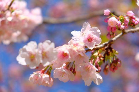 お花見の席でモテない人の特徴
