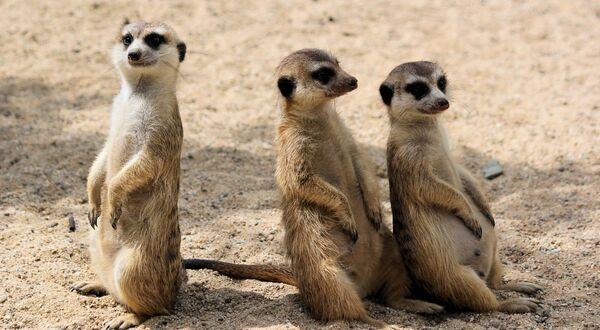一番面白いと思う3人組お笑い芸人ランキング